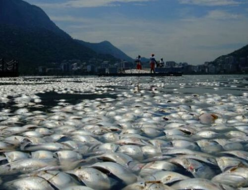 Overfishing: Market Failure at its Best